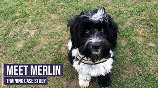 Obedience and recall training for a Tibetan Terrier