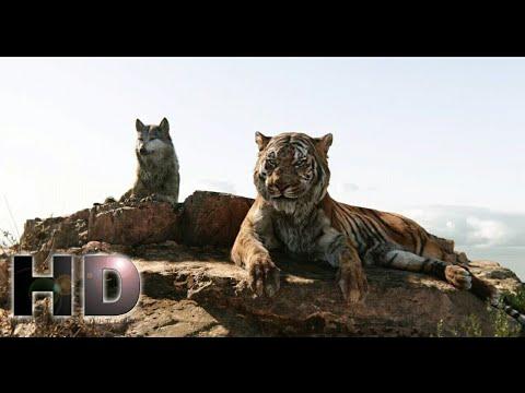 Download The Jungle Book (2016) - Sherekhan Kill Akela Scene | Hollywood MovieClips In Hindi