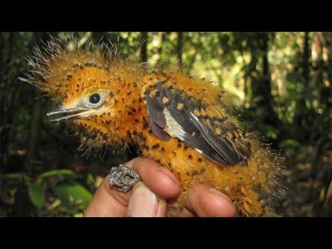 Chim đẹp | Top những loài chim đẹp quý hiếm số 1 thế giới -[ANIMAL]
