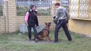 Оazis Dogs Оazis Dogs площадка для дрессировки собак в Тюмени