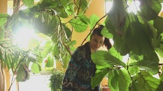 Video This woman turned her Brooklyn apartment into a forest download MP3, 3GP, MP4, WEBM, AVI, FLV November 2017