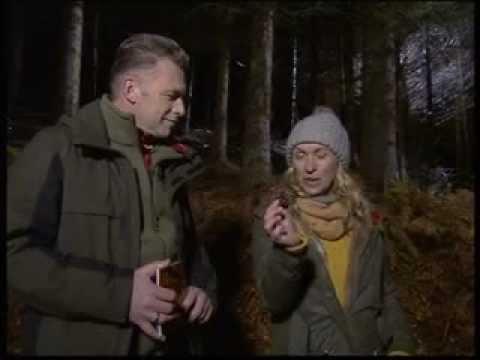 Part 2 BBC Autumnwatch 2012  Episode 1