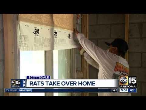 Family finds rat infestation after buying Scottsdale home