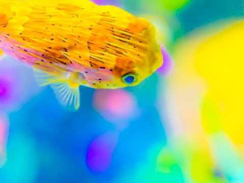 美しい海の世界へ 美しい魚たち ダイビング
