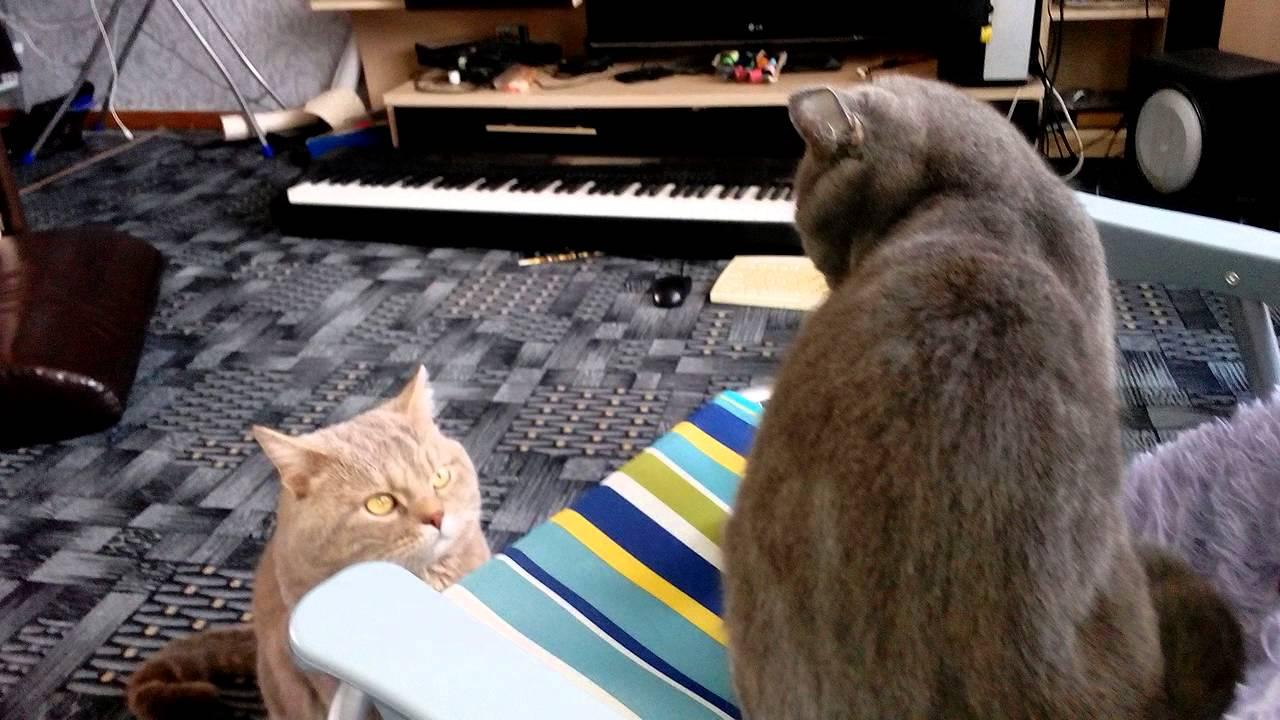 Кошка и кот в одной квартире - YouTube