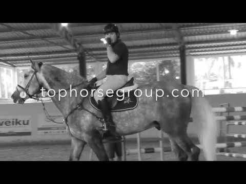 Top horse group HF Cardento