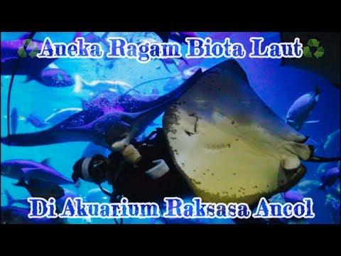 akuarium-raksasa-di-jakarta-|-explore-sea-world-ancol-jakarta