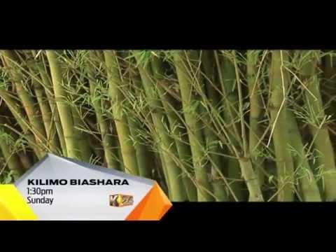 Bamboo Farming Teaser