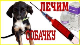 Укол Собаке Делать НЕ БУДЕМ Как ЛЕЧИТЬ Собаку Серия #3 Лечим Щенка