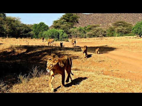 Exploring Samburu: A luxury safari game drive with Saruni Samburu in Kenya