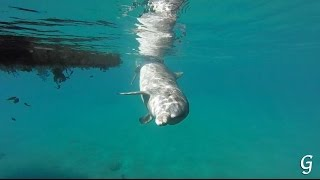 Дельфинарий в Эйлате Dolphin Reef Eilat: дельфины в природе шоу с дельфинами кормление дельфинов