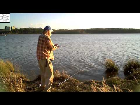 Video Premo catfish bait