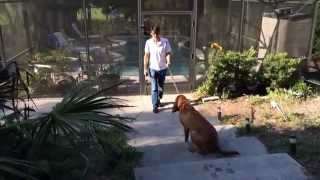 Train A Bloodhound With An Electronic Collar!