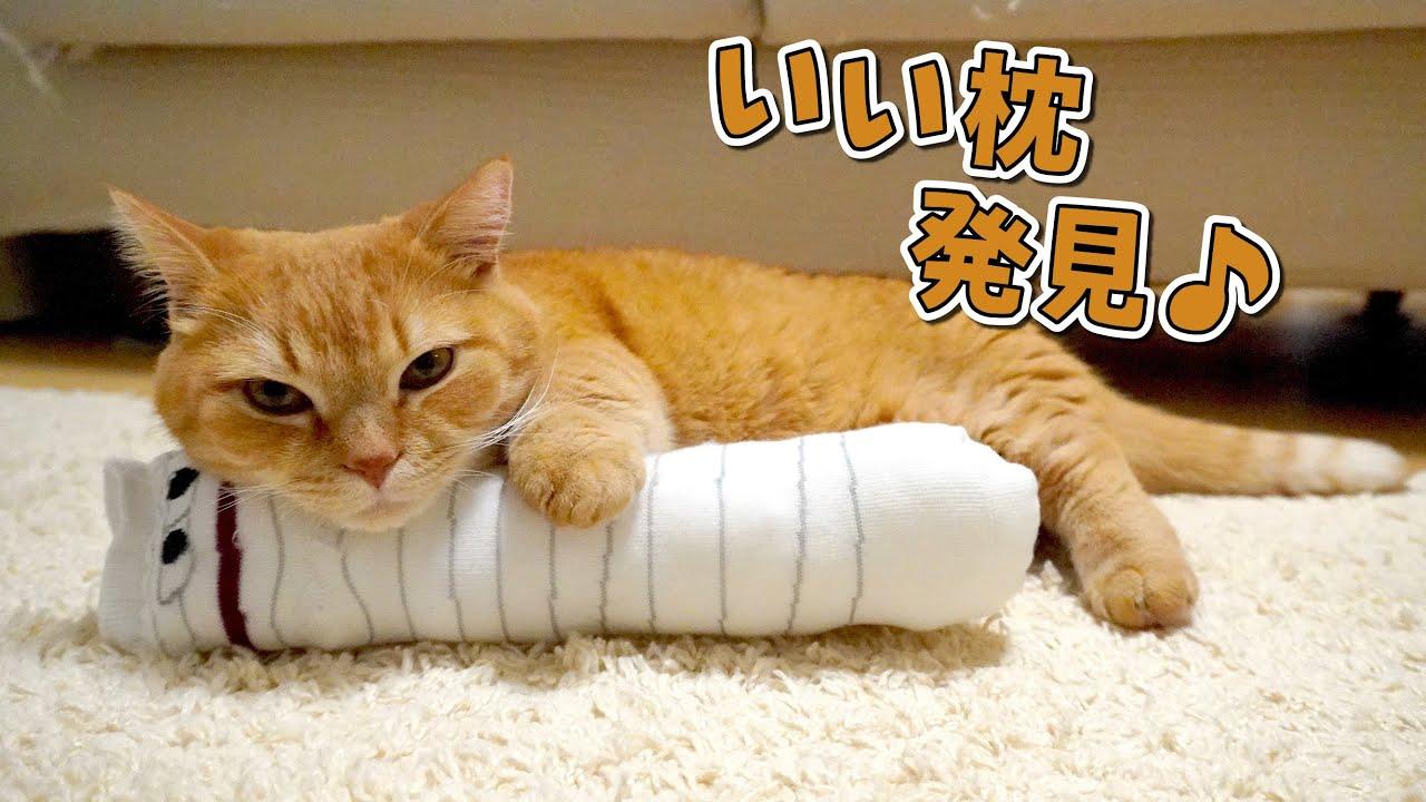 愛猫に手作りおもちゃをあげたら思ってたのと違ったけど結局可愛いw