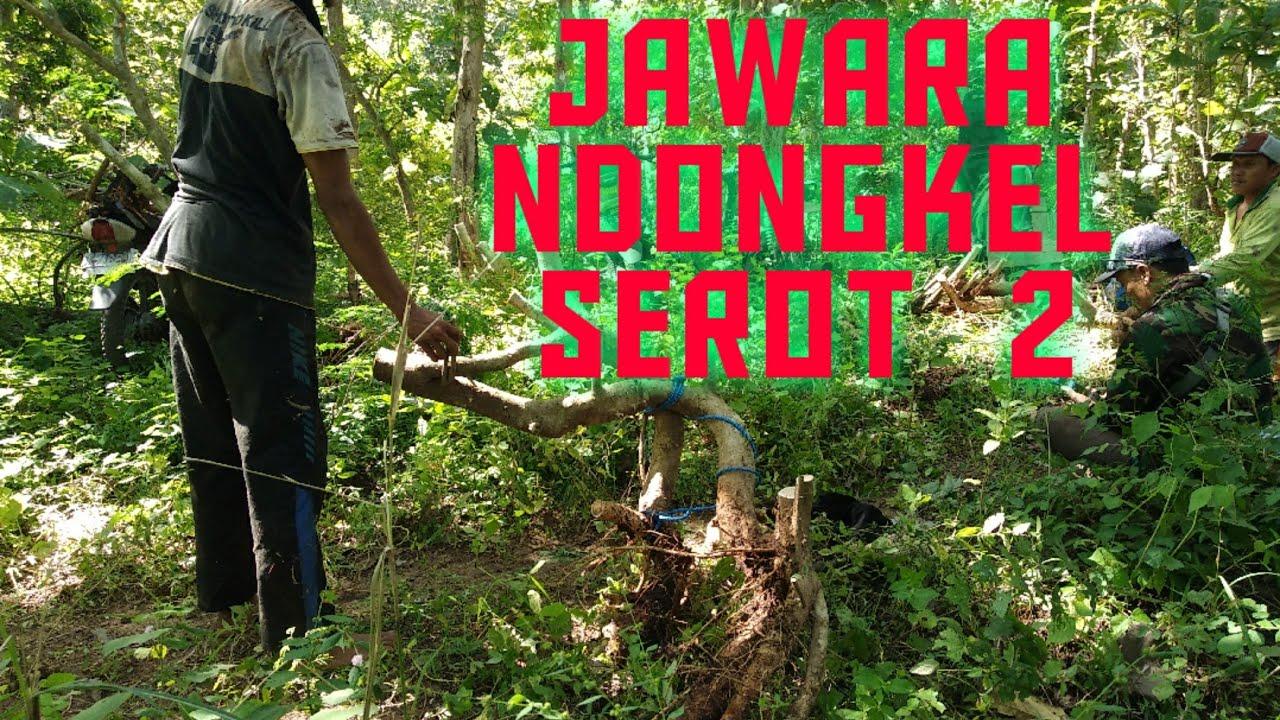 JAWARA NDONGKEL SERUT BANYUWANGI PAT 2