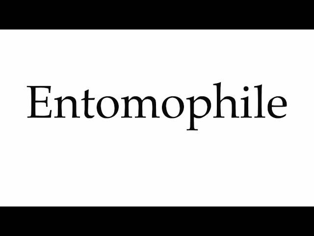 How to Pronounce Entomophile