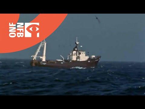 Trawler Fishermen