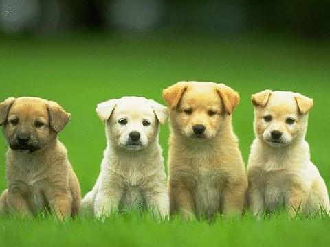 PAWSitively Petland Radio Show-Shetland Sheepdog, Potty Training, Lil'Gimmes!