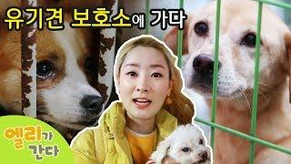 [엘리가 간다] 강아지 유기견 보호소에서 귀여운 강아지들을 만나다. 말 못하는 동물들에게 어떤 사연이?   엘리앤 투어