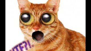 Реакция старого кота на звуки пищащих котят