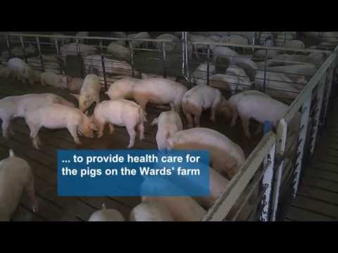 Antibiotics and vaccine use on a pig farm