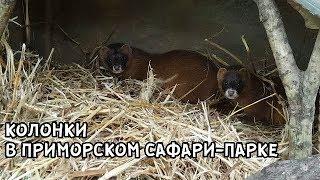 КОЛОНКИ В ПРИМОРСКОМ САФАРИ-ПАРКЕ