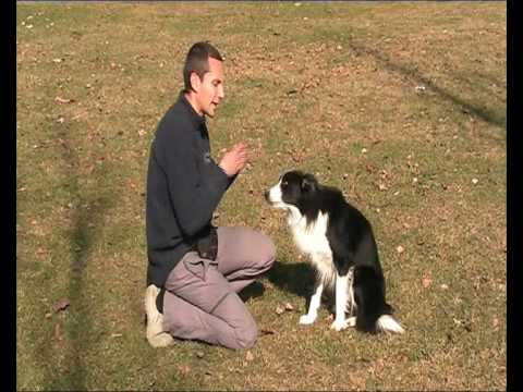 Habilidades Caninas 'Pide Perdón'