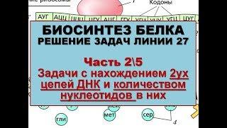 бИОСИНТЕЗ БЕЛКА. РЕШЕНИЕ ЗАДАЧ (2\5 часть - Нахождение 2 цепей ДНК и нуклеотидов))