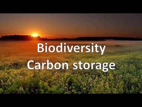 Mycorrhizal Fungi: Invisible Architects of Ecosystem Diversity by Jeremiah A. Henning