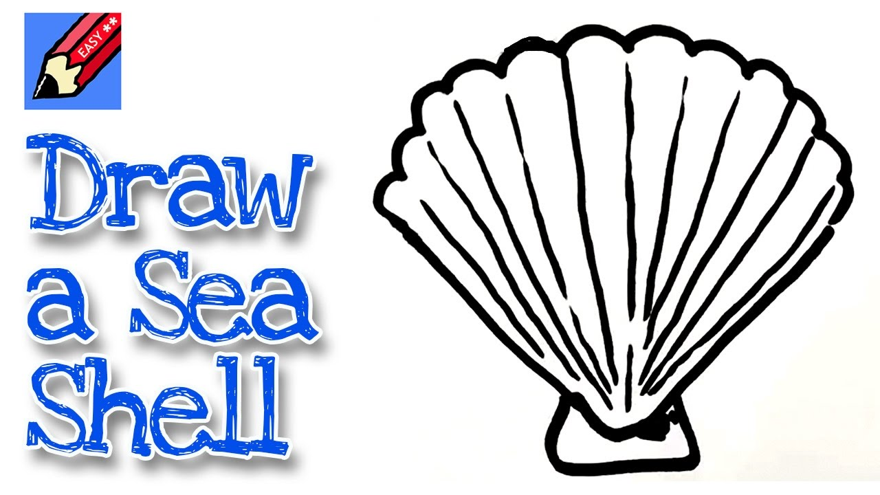 Simple Shell Drawing How To Draw A Sea Real Easy Youtube