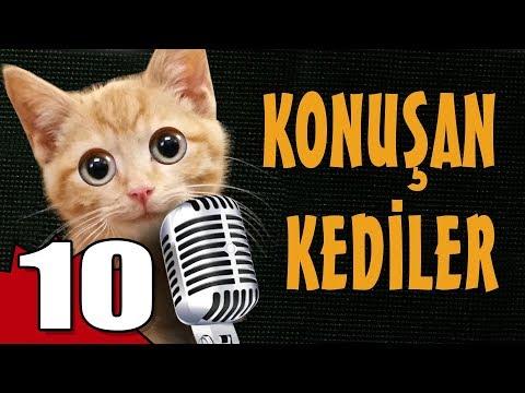 Konuşan Kediler 10 - En Komik Kedi Videoları