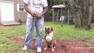 Dog Training & Care : How Do I Train A Deaf Dog?