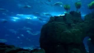 Oceanarium, Lisbon Aquarium, Portugal