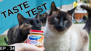 Siamese Cat loves baby food