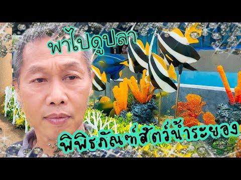 พิพิธภัณฑ์สัตว์น้ำระยอง Rayong Aquarium  by         krit lifestyle