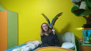 Плюсы и минусы содержания большого попугая