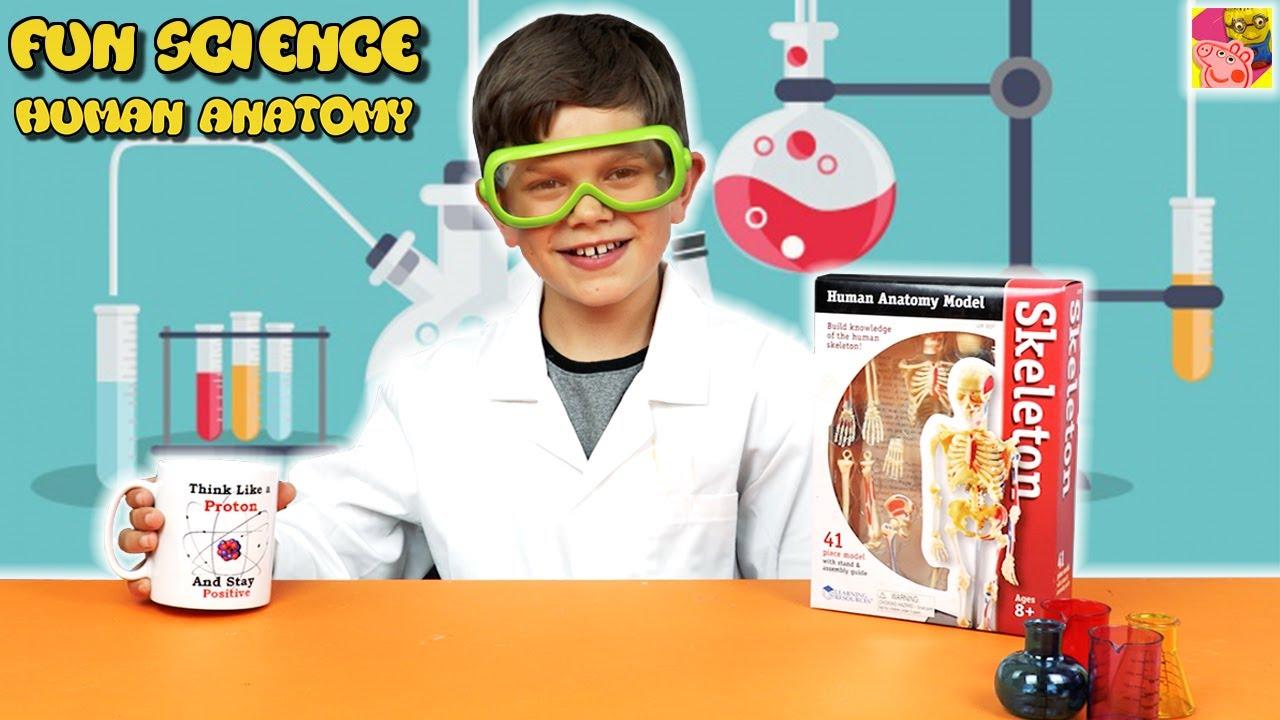 Learn About Human Body Anatomy Model Learn Your Organs Fun