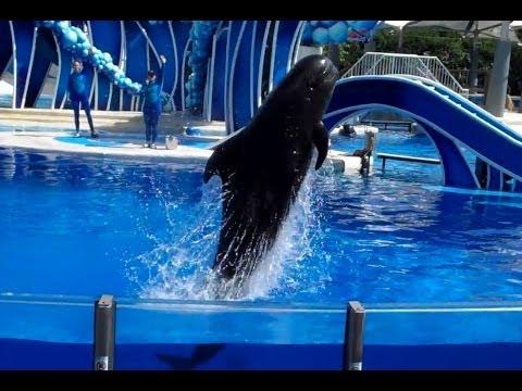 Pilot Whale Pre-Show at SeaWorld Orlando (9/8/13)