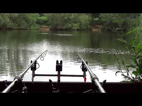 FISH ON!! Slipe Lane Pits Railway Carp Run Carp Fishing Turnford Consortium Carp Fishing Carp Lake
