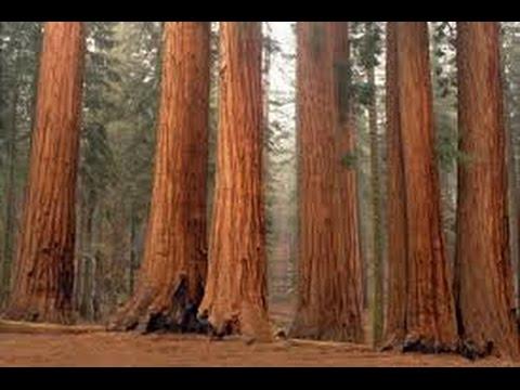Sequoia National Park. California 1999.