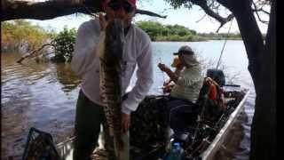 Baixar Pescaria Rio Araguaia  Luiz Alves-GO