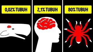 Ukuran Organ Hewan Paling Ekstrem: dari yang Terbesar hingga yang Terkecil