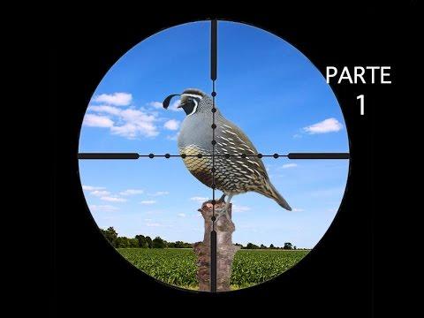 Caza De Palomas Y Perdices Con Rifle De Aire parte 1