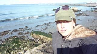 How to Make Seaweed Fertilizer