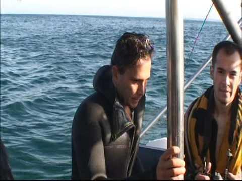 Daniel Klinger - Mergulho com os Tubarões Branco