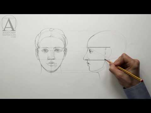 Human Head Proportions - Anatomy Lesson for Artists