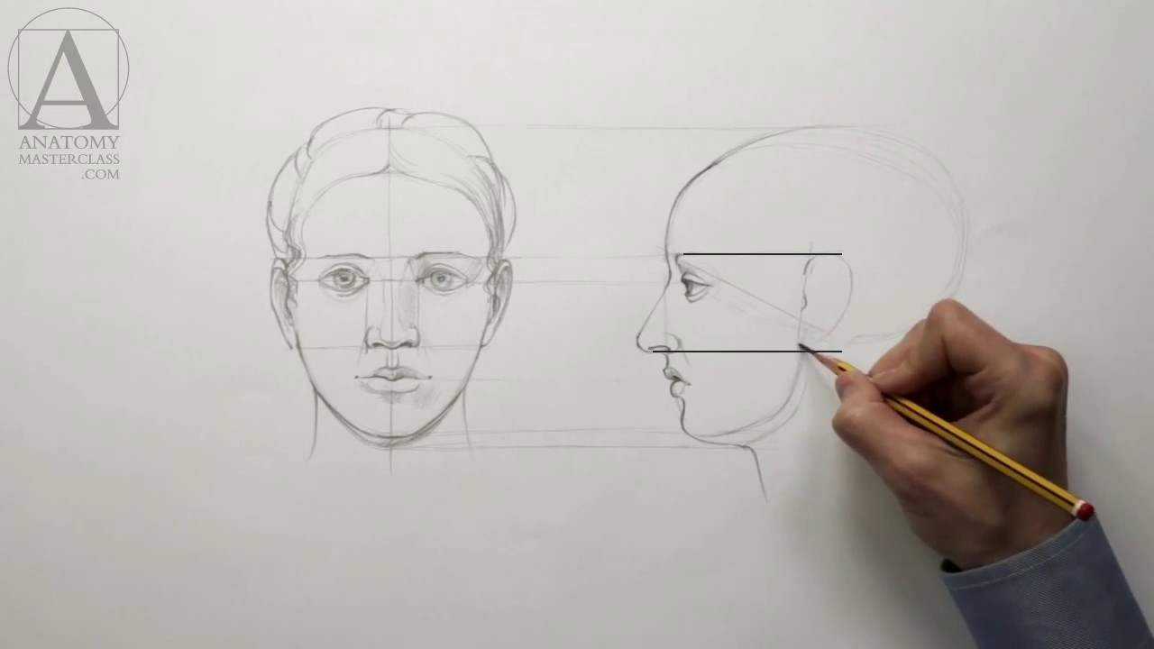 Human Head Proportions - Anatomy Lesson for Artists - YouTube