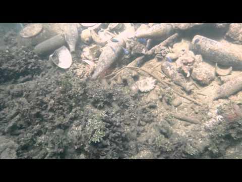 Gosei Maru Wreck Dive