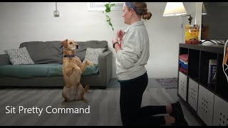 Teach Your Dog to Sit Pretty