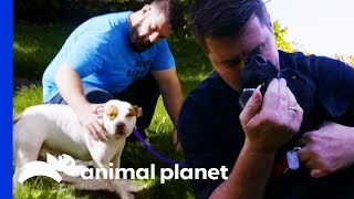 These Adorable Pups Are Ready To Go To Their Forever Homes | Pit Bulls & Parolees